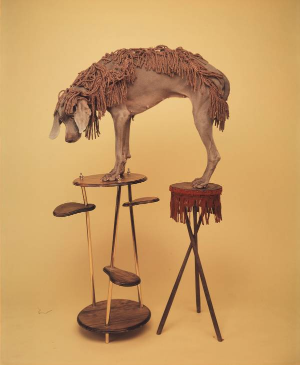 William Wegman, Fringed Set