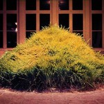 Hans Haacke, Grass Grows, 1967-69
