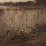 Rudolph Eickemeyer, The Lily Pond, 1916, gelatin sliver print, toned.