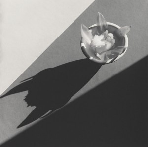 Robert Mappletorpe, Orchid 1987