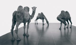 Nancy Graves, Camels